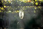 Jakobsweg (Caminho Português): Sonnendurchflutetes Spinnennetz in einem Weinberg - Angueira de Suso
