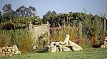 Jakobsweg (Caminho Português): Altes Eisentor vor einem Weinberg - Angueira de Suso