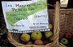 Jakobsweg (Camino a Fisterra): Korb mit Äpfeln - Susavila de Carballo