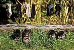 Jakobsweg (Camino a Fisterra): Schuhe und Socken werden gelüftet - Trasmonte