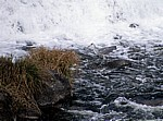 Jakobsweg (Camino a Fisterra): Río Tambre – Graureiher (Ardea cinerea) - Ponte Maceira