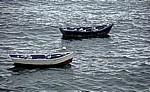 Jakobsweg (Camino a Fisterra): Fischerboote mit Lachmöwen (Larus ridibundus) - Corcubión