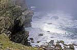 Cape of Good Hope (Kap der Guten Hoffnung): Steilküste - Cape of Good Hope Nature Reserve