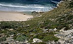 Cape of Good Hope (Kap der Guten Hoffnung): Diaz Beach - Cape of Good Hope Nature Reserve