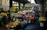 Adderley Street: Blumenmarkt - Kapstadt