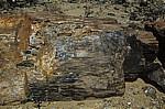Versteinerter Wald: Fossiler Baumstamm - Khorixas
