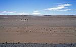 B4 (Aus nach Lüderitz): Afrikanische Sträuße (Struthio camelus) im Diamantensperrgebiet  - Karas