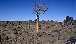 Spielplatz der Riesen: Dolerit-Felsen (in den dunklen Bereichen mit Wüstenlack überzogen) - Karas