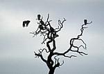 Geier auf einem abgestorbenen Baum - Kruger National Park