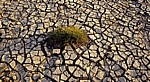 Gras am ausgetrockneten Ufer des River Mersey - Hale