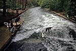 Englischer Garten: Wellenreiter auf dem Eisbach - München