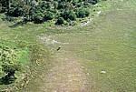 Flug Kwara - Maun: Afrianischer Elefant (Loxodonta africana) im Delta - Okavango-Delta