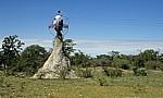Termitenhügel mit Hinweis für Planet Baobab - Gweta