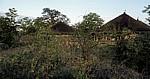 Planet Baobab: Rondavel - Gweta