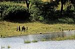 Okavango als Grenzfluß zwischen Nambia und Angola: Lebensader für die Anwohner - Kavango