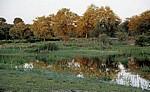 Popa Game Park: Bäume spiegeln sich im Okavango - Kavango