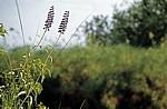 Popa Game Park: Blaue Blüten - Kavango