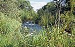 Popa Game Park: Popa Falls (Popafälle) - Stromschnellen - Kavango