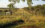 Grenzsstreifen zwischen Weideland (links) und dem Etosha National Park (rechts)  - Oshikoto