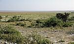 Blick auf die Etoshapfanne - Etosha Nationalpark
