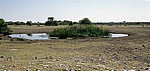 Chudop-Wasserloch - Etosha Nationalpark