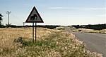C35: Verkehrsschild Vorsicht Elefanten - Kaokoveld