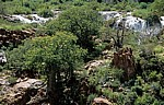 Baobabs / Afrikanische Affenbrotbäume (Adansonia digitata) - Kunene