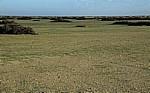 Namib: Gras - Erongo