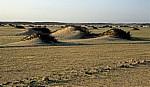 Namib: Kleine Dünen inmitten der grünen Wüste - Erongo
