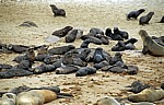 Robbenkolonie: Südafrikanische Seebären (Arctocephalus pusillus) - Jungtiere - Cape Cross