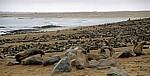 Robbenkolonie: Südafrikanische Seebären (Arctocephalus pusillus) - Cape Cross