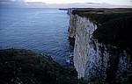 Bempton Cliffs - Bempton