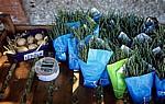 Verkaufsstand für Europäischen Queller (Salicornia europaea) und Eier (Informeller Sektor) - Morston