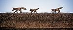 The Street: Füchse aus Reet auf einem Reetdach - Stoke-by-Clare