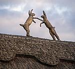 The Street: Hasen aus Reet auf einem Reetdach - Stoke-by-Clare