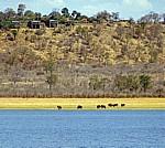 Fähre Kariba - Mlibizi: Bumi Hills Safari Lodge - Lake Kariba