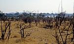 Vegetation zum Ende der Trockenzeit - Victoria Falls National Park