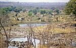 Afrikanische Elefanten (Loxodonta africana) in Ufernähe des Zambezis - Victoria Falls National Park