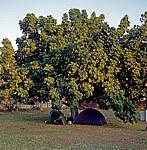 Victoria Falls Rest Camp: Zelt mit diversem Campingequipment unter einem Baum - Victoria Falls