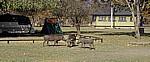 Main Camp: Warzenschweine (Phacochoerus africanus) - Hwange National Park