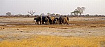 Nyamandhlovu Pan: Afrikanische Elefanten (Loxodonta africana) - Hwange National Park
