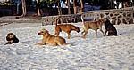 Hunde am Strand - Pereybere