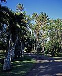 Sir Seewoosagur Ramgoolam Botanical Garden (Pamplemousses Botanical Garden): Diverse Palmen - Pamplemousses