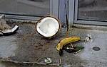 Opfergaben: u.a. Kokosnüsse, Bananen, Blumen, Räucherstäbchen, Geld - Grand Bassin