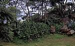 Felsformation und Vegetation - Lake Chivero
