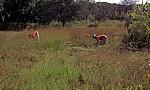 Frauen bei der Feldarbeit - Masvingo Province