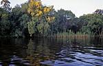 Uferbewuchs spiegelt sich im Zambezi - Victoria Falls National Park