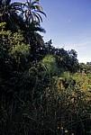 Tropische Vegetation - Bovu Island