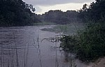 Jungle Junction: Zambezi im Morgennebel - Bovu Island