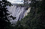 Blick durch die Bäume auf den Eastern Cataract - Victoriafälle (Zambia)